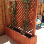 Camarillo Privacy planter
