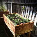 "48 x 24 x 36"" tall - torched pine elevated planter box"
