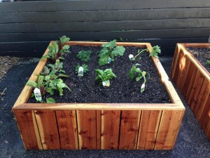 51 x 51 x 18 redwood planter