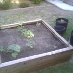 Great customer in Glendale, 48 x 48 x 12 custom redwood raised bed planter