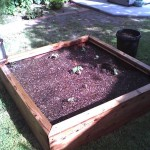 Glendale - on the grow - 48x48x12 redwood planter box