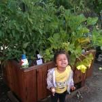 48 x 24 x 32 elevated redwood planter box - Happy little gardener!