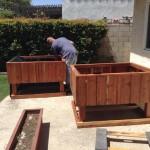 Big elevated redwood garden planters