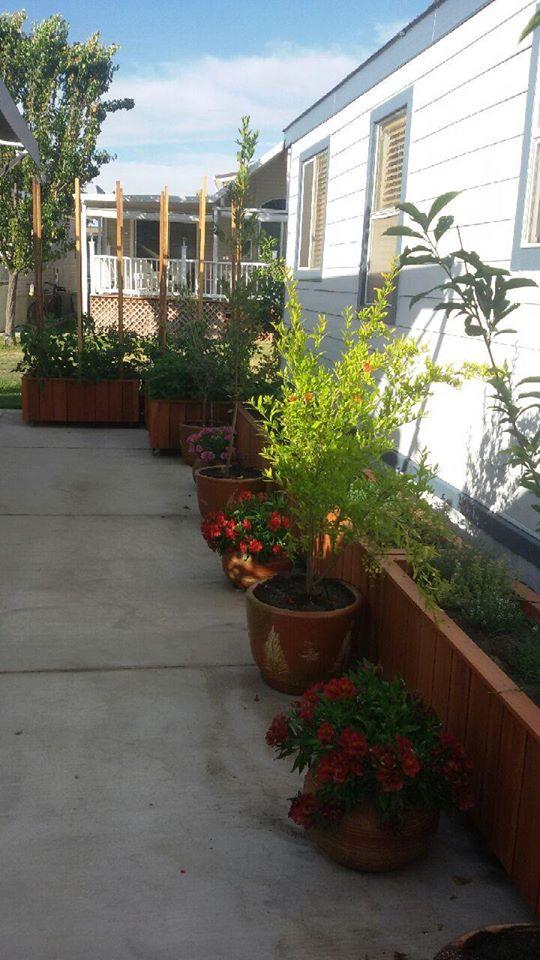 Custom redwood planter boxes