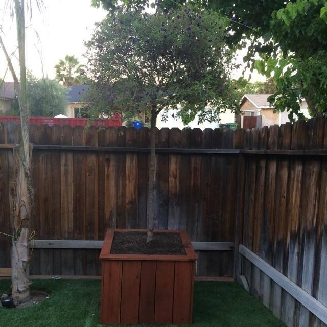 Custom redwood tree planter box